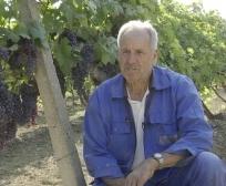 Laboratori i Verërave në Rahovec, matës i cilësisë së verës kosovare