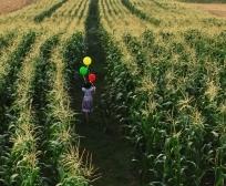 Publikohen rezultatet preliminare të granteve në bujqësi edhe për disa sektorë