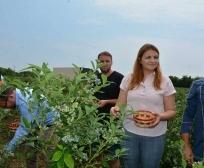 Ministarka Zivic u poseti plantazi borovnica