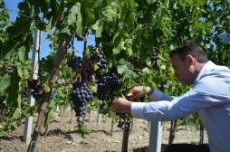 Ministri Faton Peci mori pjesë në Festën e Vjeljes së Rrushit