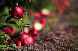 """Ministarstvo poljoprivrede raspisuje JAVNI POZIV za dodelu bespovratnih sredstava u okviru """"Programa za društveno - ekonomsku integraciju malih farmi u zajednici"""""""