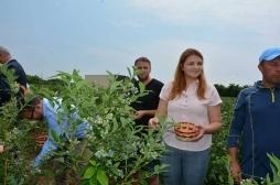 Promovohet kultivimi i boronicës