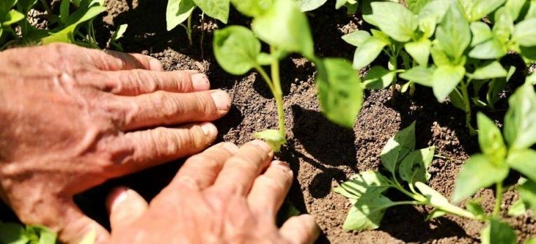 Ministar Mustafa: Udvostručuje budžet za direktna plaćanja u poljoprivredi